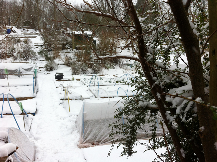 allotment in the snow [2]