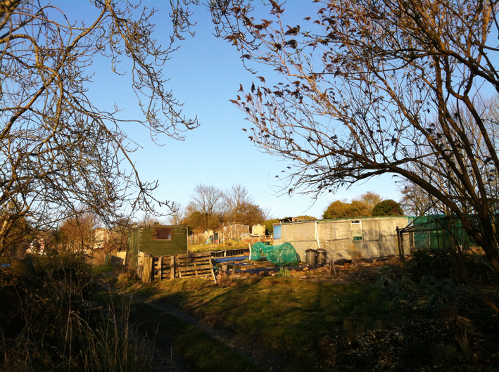 allotment [winter light]1