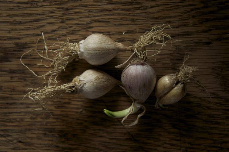 garlic ? [2]