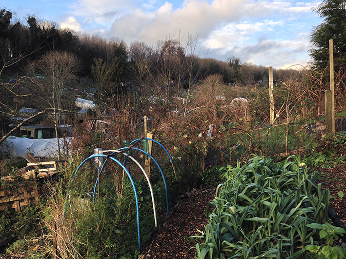 winter allotment view