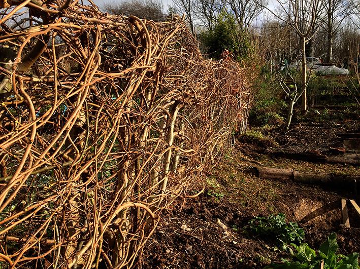 hedge waeve[2]