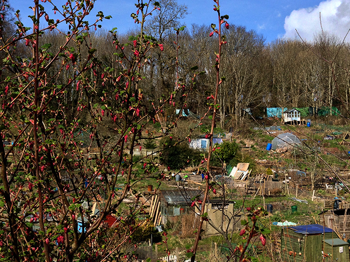 flowering current_allotment