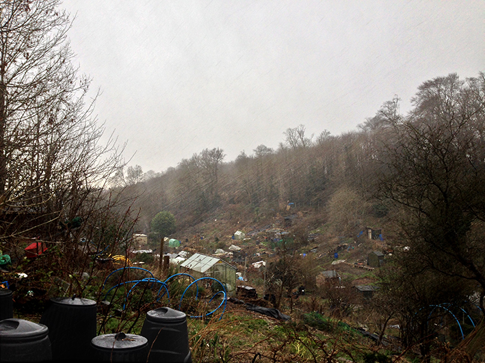hail storm_allotment