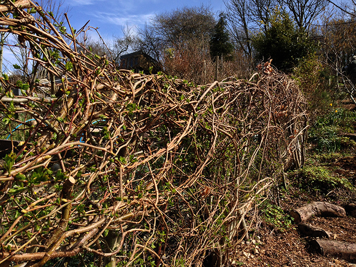 hedge_allotment.2