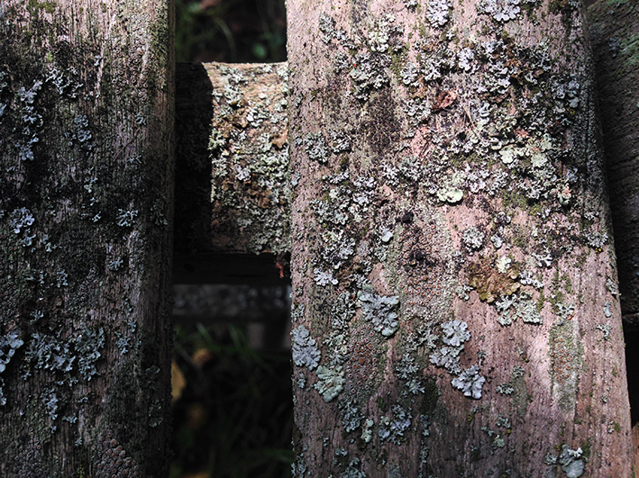 lichen-on-bench