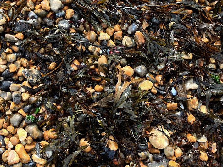 seaweed_saltdean-1