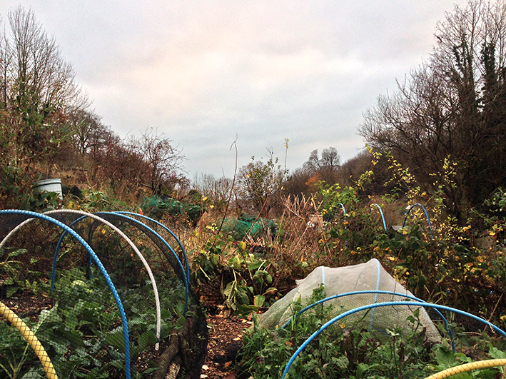 allotment_late-afternoon-1