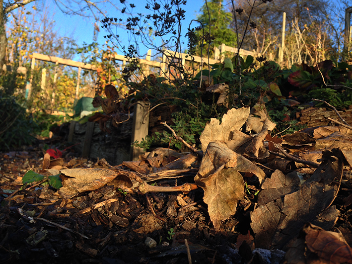 allotment_leaf-litter