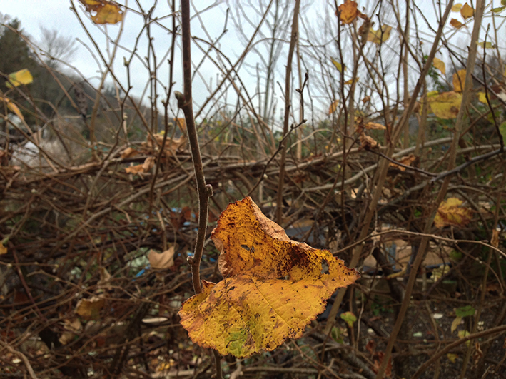 autumn-hedge_allotment
