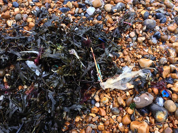 seaweed_flotsam